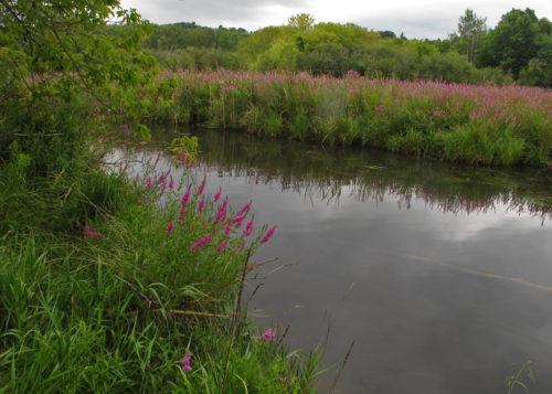 boyne-river-delta