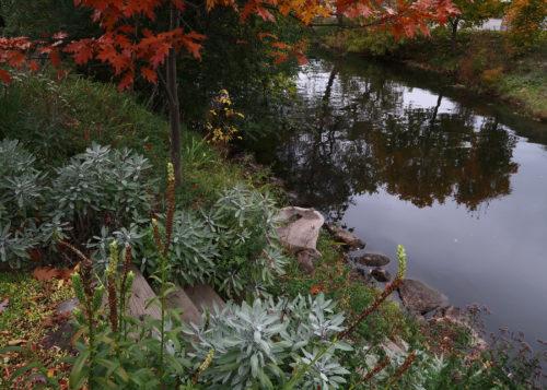 boyne-river-from-park-street