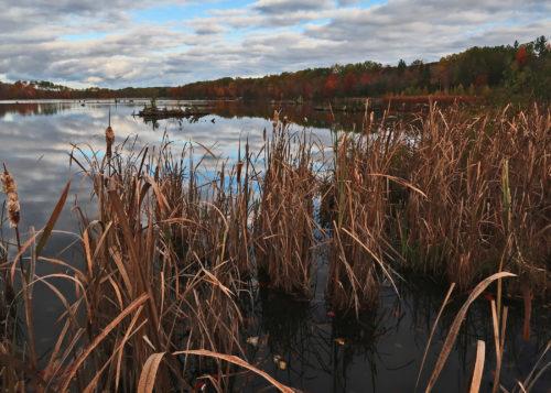 kircher-pond-early-morning