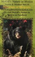 McGill's brochure cover